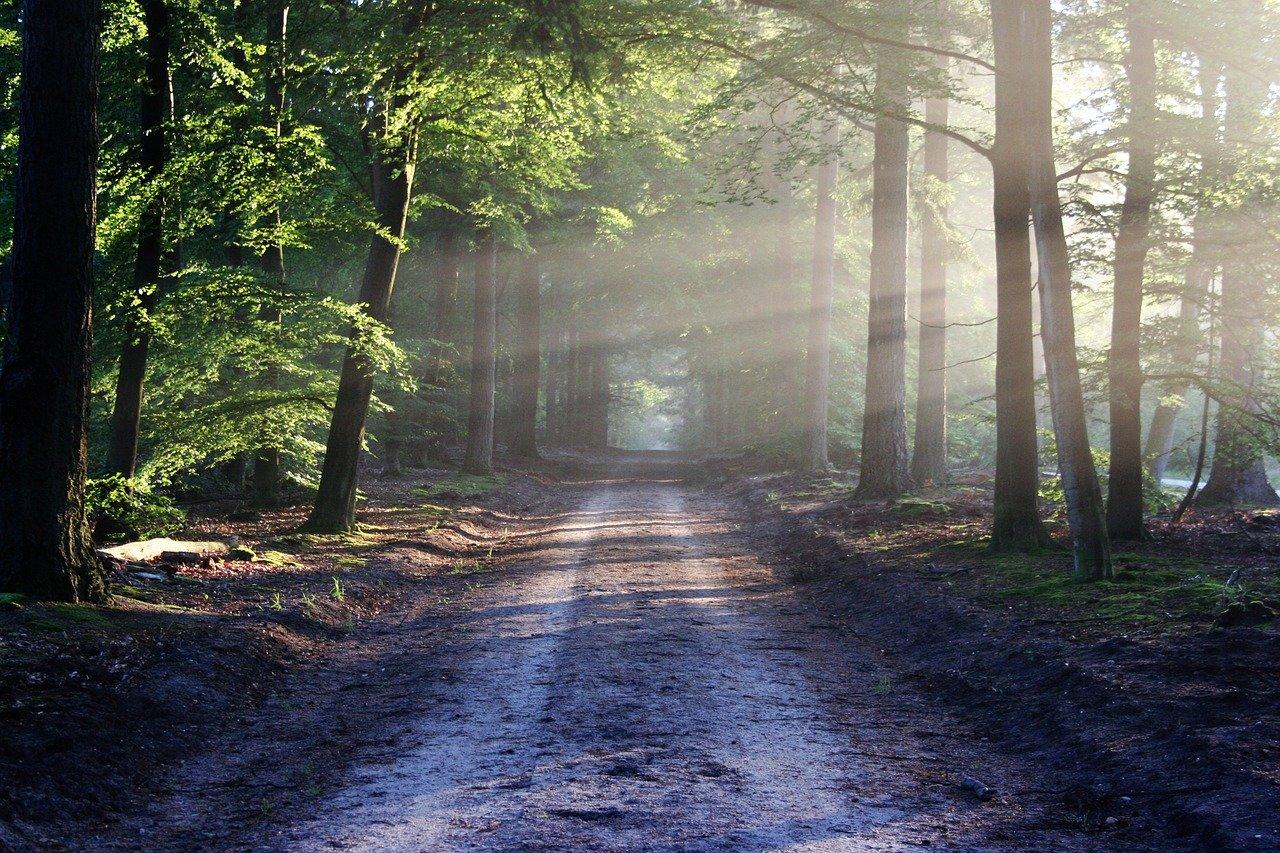 lesní prostředí