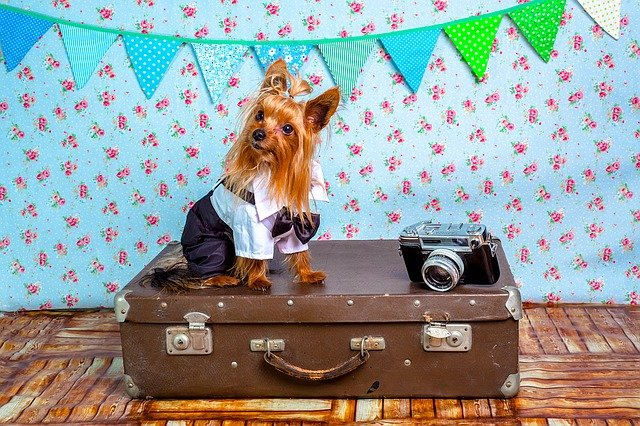 oblečený pes sedí na cestovním kufru