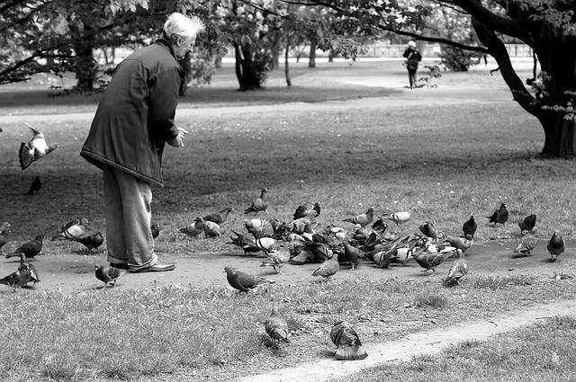 pan krmící v parku holuby